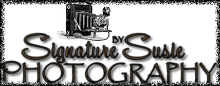 Visit Signature by Susie Photography